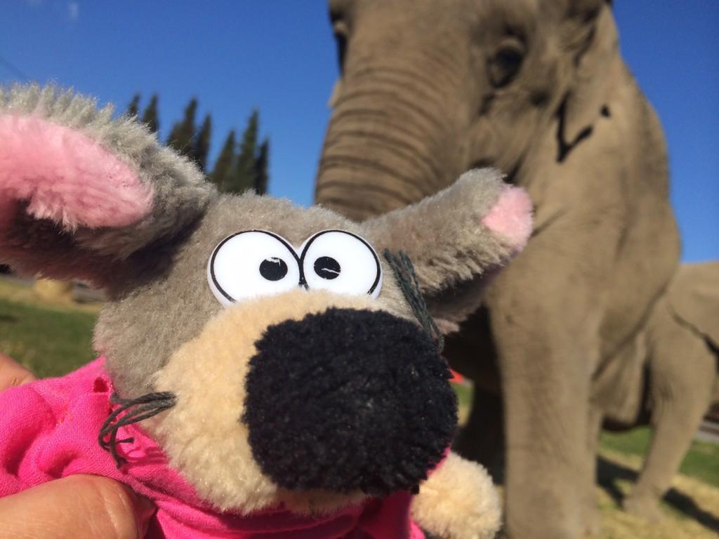 villevalla_elefant