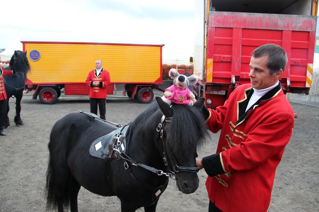 VV rida svart häst huvud