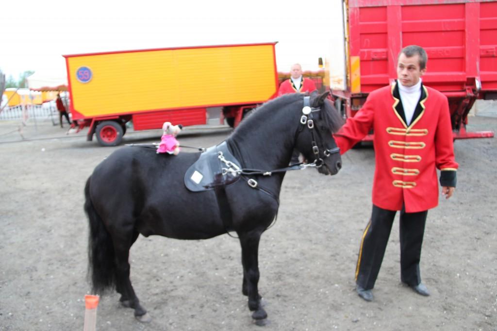 VV rida svart häst