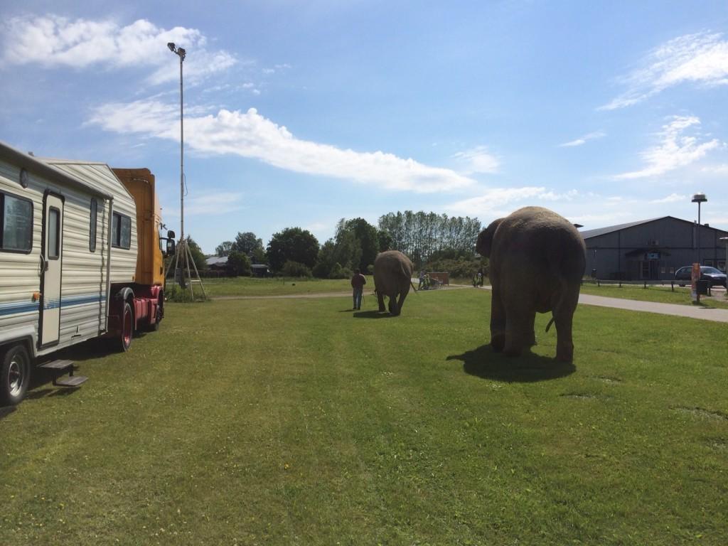 elefanter östhammar