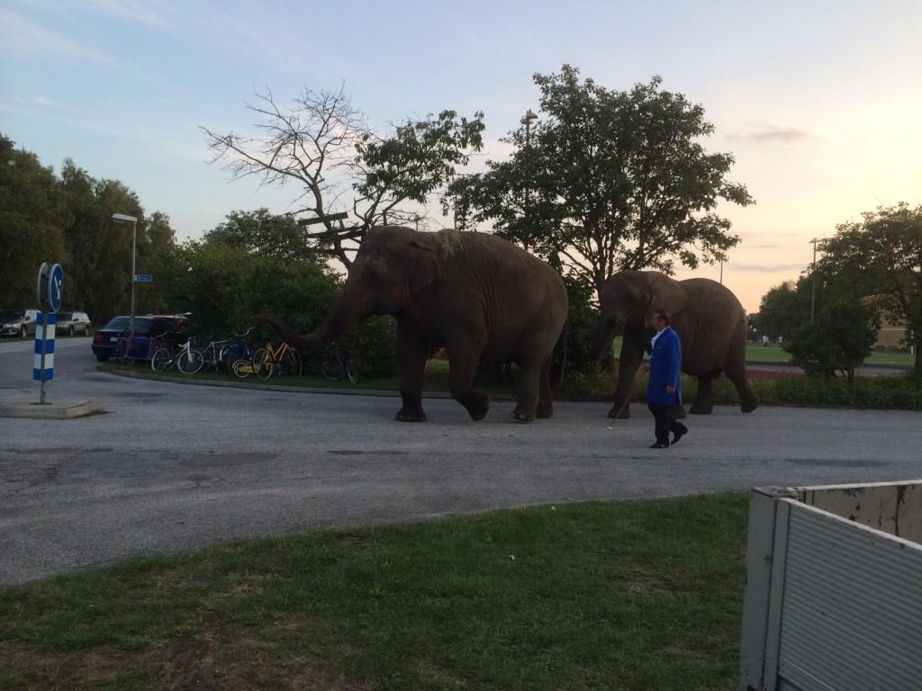 elefant skanör